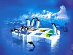 Пингвины на тонущих окнах