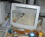 Клетка для хомяка из монитора.