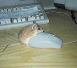 Мышка хочет мышку