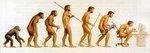 Эволюция и деградация человека