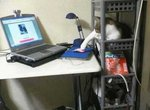 Кот добрался до мыши