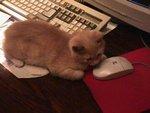 Кот поймал мышь!