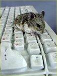 Мышь VS Клава