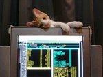 Котенок пригрелся на мониторе